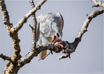 BSK-eating-mouse_2809