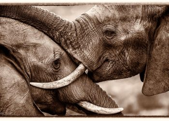 tusks-and-trunks