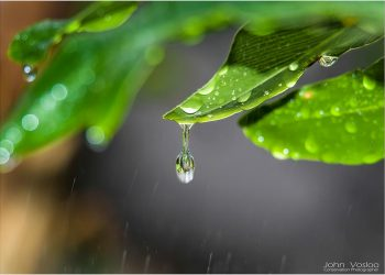 water-droplets_3671