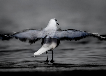 moody-haertlaubs-gull-in-the-mist-as-Smart-Object-1